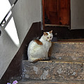 Cat On Steps by Fay Geddes