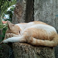 Cat On The Tree by AG Suelto