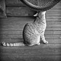 Cat by Patrick M Lynch