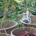 Cat Playing In Flowerpot by Cliff Ball
