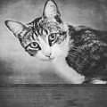 Cat Portrait 4 by Wolf Shadow Photography