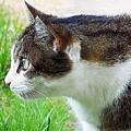 Cat Profile by Queso Espinosa