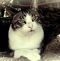 Cat Relaxing by Pamela Walton