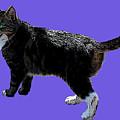 Cat Says by Francesca Mackenney
