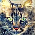 Cat Simba by Justyna JBJart