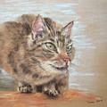 Cat Sitting On Lookout by Karen Kaspar