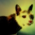 Cat by Steven Digman