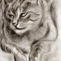 Cat Study Drawing No One by Hiroko Sakai