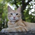 Cat Volterra Italy by Edward Fielding
