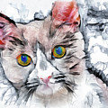 Cat Watercolor Digital Art by Matthias Hauser
