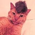 Cat Wearing A Wig by Derek Longman