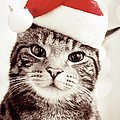 Cat Wearing Christmas Hat by Michelle McMahon