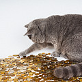 Cat With Coins by Queso Espinosa