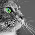 Cat With Green Eyes by Victor Vega