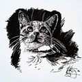 Cat With Ink by Kirsten Slaney