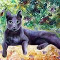 Cat by Yana Sadykova