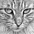 Cat by Yana Wolanski