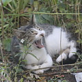 Cat Yawning In The Garden by Cliff Ball