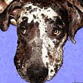 Catahoula Leopard Dog - Soulful Eyes by Sharon Cummings