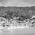 Catalina Island Avalon Bay Black And White Panorama Photo by Paul Velgos