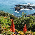 Catalina Island Coastline by Rose Webber Hawke