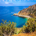 Catalina Island Lover's Cove Picture by Paul Velgos