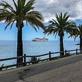 Catalina Palms by Dave Muesbeck