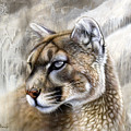 Catamount by Sandi Baker