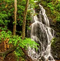 Cataract Falls In Great Smoky Mountains National Park by Larry Knupp