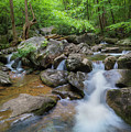Catawba Stream In Pisgah National Forest by Ranjay Mitra