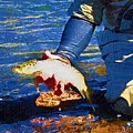 Catch And Release by Diane E Berry