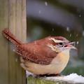 Catching Snowflakes by Kerri Farley