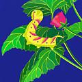 Caterpillar by Lucyna A M Green