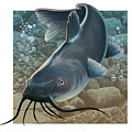 Catfish by Valer Ian