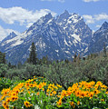 Dm9328-cathedral Group Tetons  by Ed  Cooper Photography
