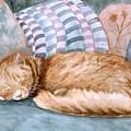 Catnap by Karen Zuk Rosenblatt
