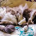 Catnap by Nancy L Marshall