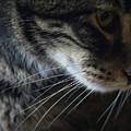 Cats Eye by Kim