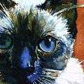 Cats Eyes 13 by John D Benson