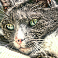 Cats Eyes by Dennis Baswell