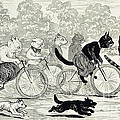 Cats In A Bicycle Race, Hyde Park, 1896 by Wellcome Images