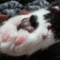 Cats Paw by Kim Henderson