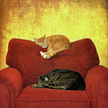 Cats Sleeping On Sofa by Nancy J. Koch, Pittsburgh, PA