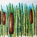 Cattails 1 by J R Seymour
