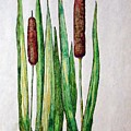 Cattails 2 by J R Seymour
