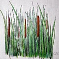 Cattails 3 by J R Seymour