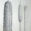 Cattails 4 by J R Seymour