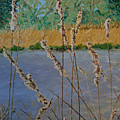 Cattails by Maria Woithofer