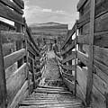 Cattle Chute by Jeff Brunton