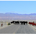 Cattle Crossing by R Thomas Berner